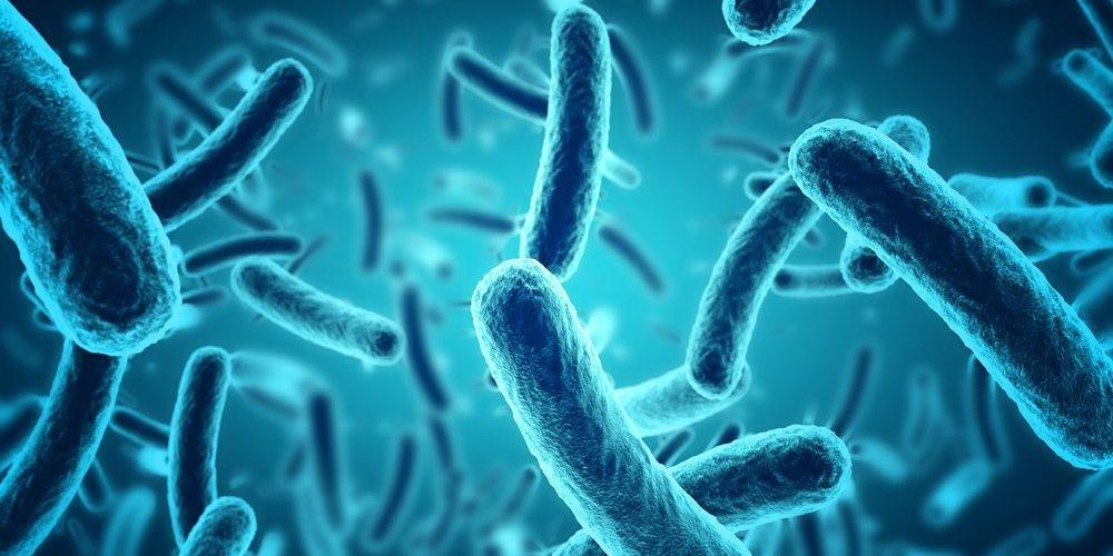 vật liệu lọc là nơi cư trú của rất nhiều vi sinh vật